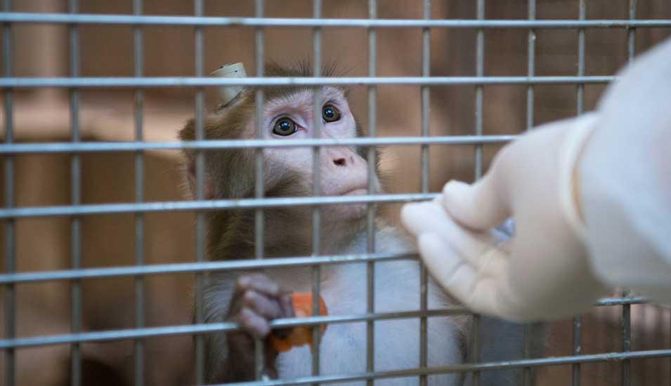 Tübingen Affen Tierversuche
