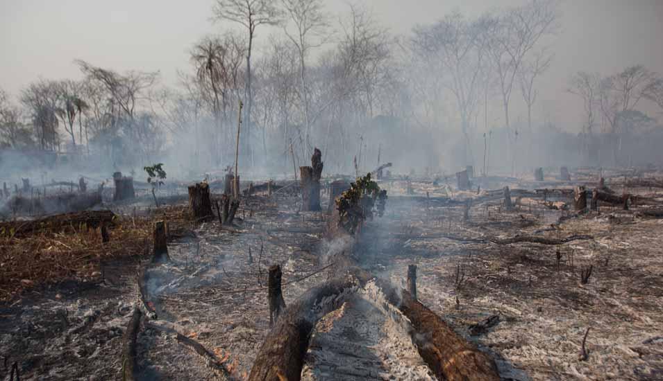 Regenwald Brand Aktuell